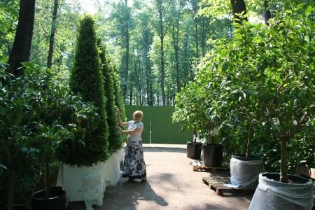 В Летний сад привезли кадочные растения из голландского сада Хет Лоо