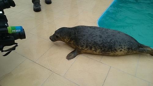 Узнать больше о Центре изучения и сохранения морских млекопитающих можно на сайте Фонда друзей балтийской нерпы