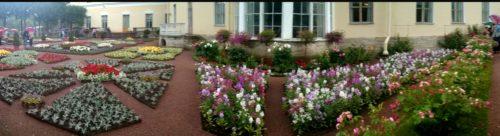 Счастливая Аркадия, придуманная флористами в Павловском парке